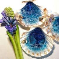 Atlantic White Scallop Shells - Medium